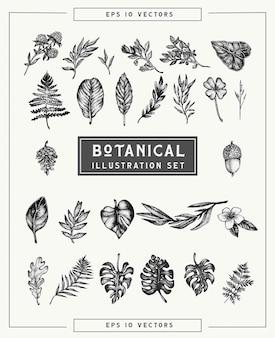 植物のビンテージ植物と花のセット。点描スタイルで描かれた美しいイラスト手。グラフィックデザインの孤立した要素、創造性のための透明なクリップアート。