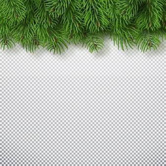 Рождественская елка ветви фон