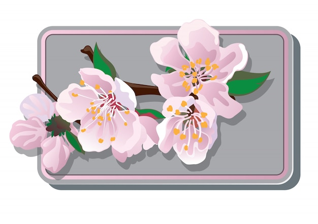 Карта цветущей вишни