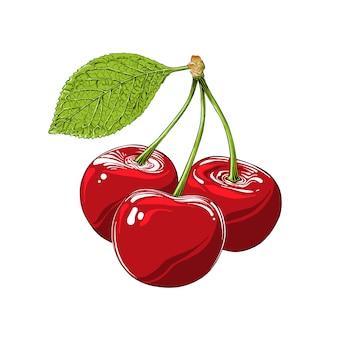 Ручной обращается эскиз вишни в цвете, изолированные. детальный винтажный стиль рисования