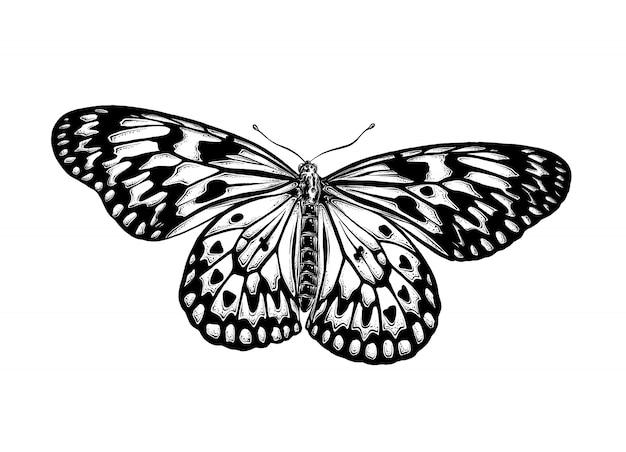 分離された黒い色の蝶の手描きのスケッチ。