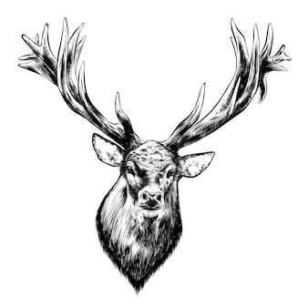 Ручной обращается очерк оленей в черном изолированные. подробный винтажный стиль рисования.