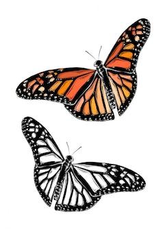 色の蝶の手描きのスケッチ。孤立した