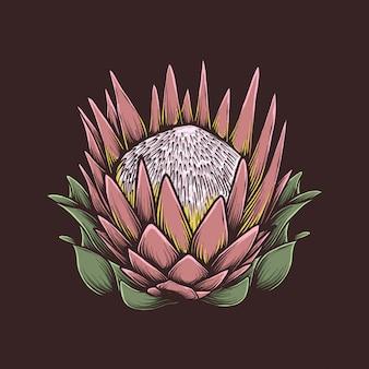 手描きのビンテージプロテアの花のベクトル図