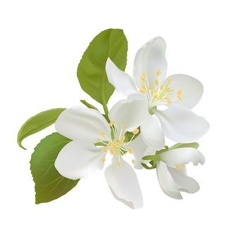 白いリンゴの花