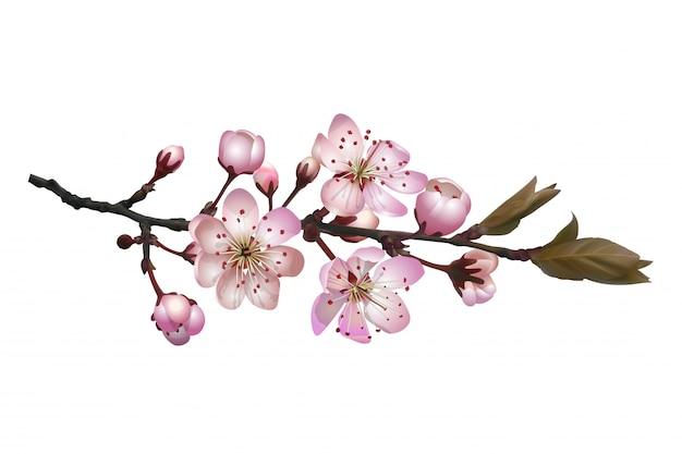 ピンクの花が咲く桜の枝