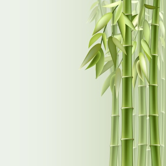 Бамбуковый фон
