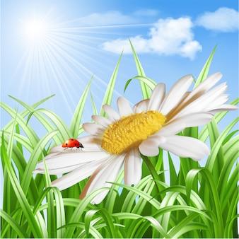 Божья коровка на ромашке цветок вектор