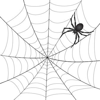 白い背景の上のクモとクモの巣。図