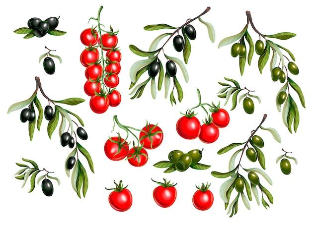 Черные оливки ветви и помидоры черри изолированы