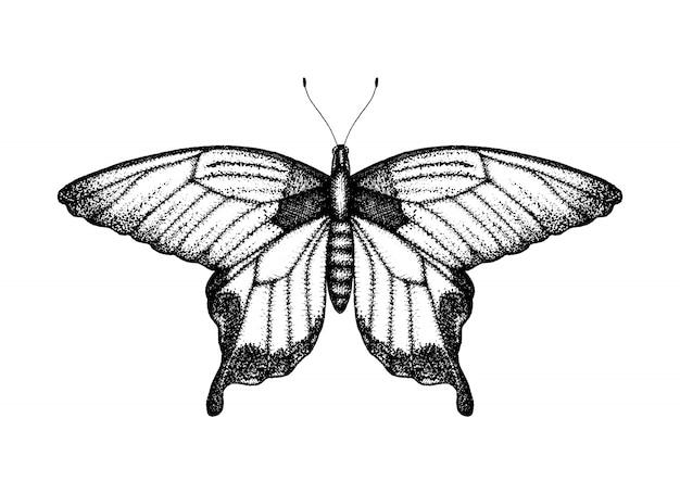Черно-белые векторные иллюстрации бабочки. ручной обращается эскиз насекомых. подробный графический рисунок крыла птицы в винтажном стиле.