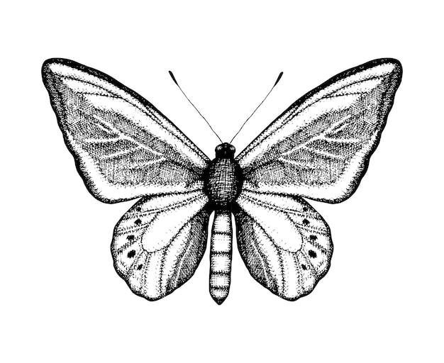蝶の黒と白のベクトルイラスト。手描きの昆虫のスケッチ。ビンテージスタイルの茶色の壁の詳細なグラフィック描画。