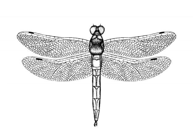 Черно-белая векторная иллюстрация стрекозы