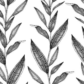 熱帯の葉の手描きイラスト