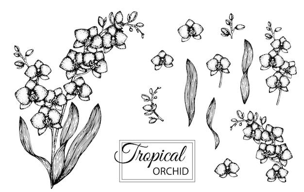 分離された熱帯の花のイラスト。手描きの蘭。