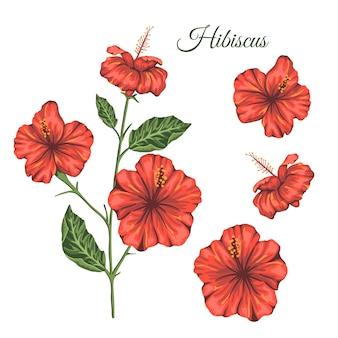 白い背景に分離された熱帯の花のイラスト。明るくリアルなハイビスカス。花の熱帯のデザイン要素。