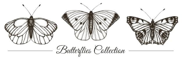 Набор рисованной черно-белых бабочек. гравюра ретро иллюстрация.