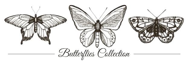 手描きの黒と白の蝶のベクトルを設定します。レトロなイラストを彫刻します。分離された現実的な昆虫