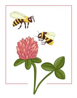 Цветной клевер с пчелой и шмелем.