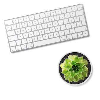 Клавиатура компьютера и суккулентный цветок изолированные на белой предпосылке.