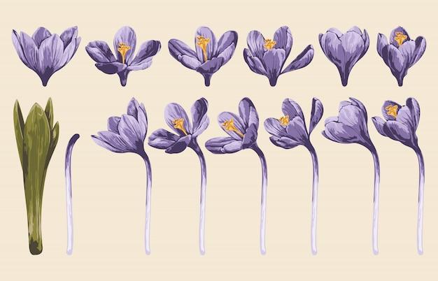 花のクリップアートセットの完全に編集可能なベクトルイラスト。
