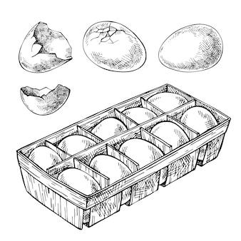 卵、卵トレイ、壊れた卵のセットをスケッチします。卵の箱。手描きの卵。刻まれた食べ物のイラスト。