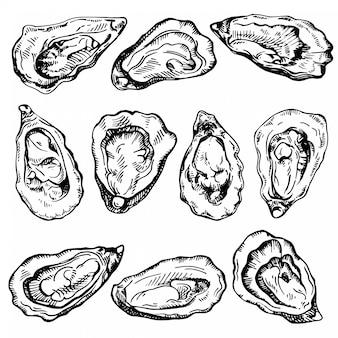 手描きスケッチオイスターセット。新鮮な魚介類のスケッチ図。