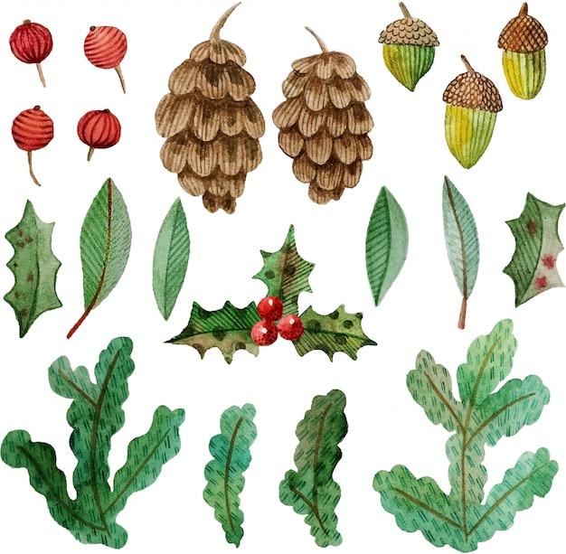 Коллекция акварелей шишки, сосновые ветки, падуб, ягоды, желуди, листья