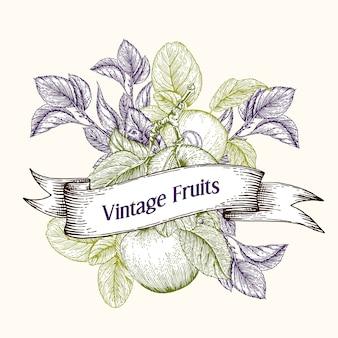 Старинные гравированные яблоки с листьями и ветками с ягодами
