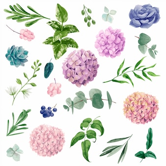 水彩画の植物要素、手描きイラスト
