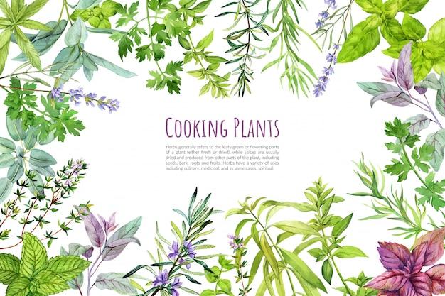 料理用のハーブと植物、フレーム、手描きの水彩画