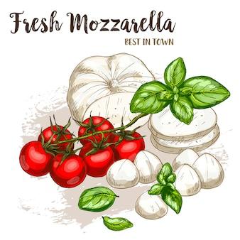モッツァレラチーズのフルカラーのリアルなスケッチ図