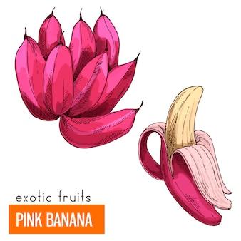 Розовый банан. цветная векторная иллюстрация.