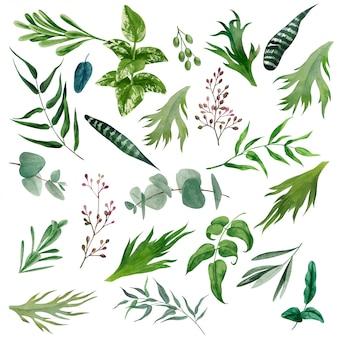 Набор акварельных листьев и ветвей, рисованной зелени