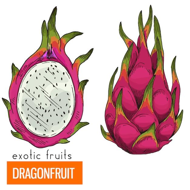Драконий фрукт. полноцветный реалистичный