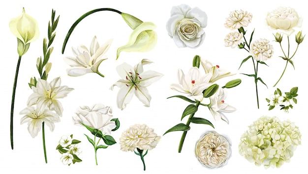 Набор белых цветов, акварель рисованной