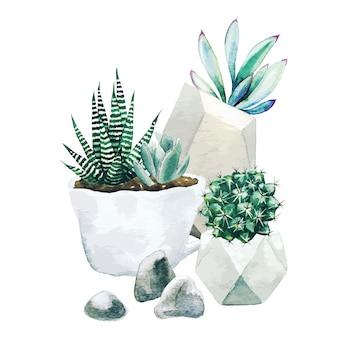 Композиция из горшечных растений кактуса и суккулентов