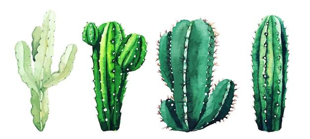サボテンの植物と多肉植物の水彩セット