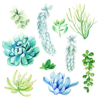 明るい手描き多肉植物、手描きの水彩セット