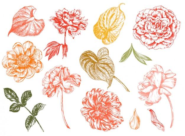 Урожай цветочные иллюстрации, травление рисованной картинки.