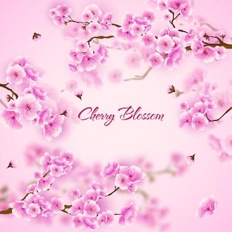 Розовая вишня сакуры цветочный фон