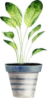 白い背景に分離された水彩観葉植物。