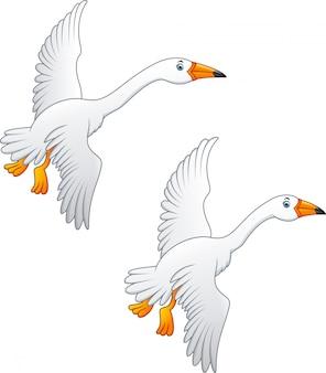 空飛ぶ白鳥の高品質の色