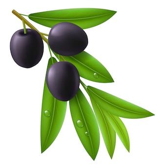 熟したブラックオリーブとオリーブの木の枝