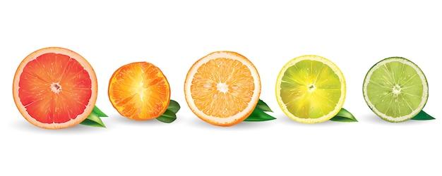 オレンジ、レモン、柑橘類、マンダリン、グレープフルーツ、ライム