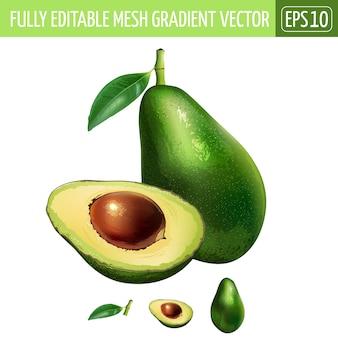 Авокадо иллюстрация на белом