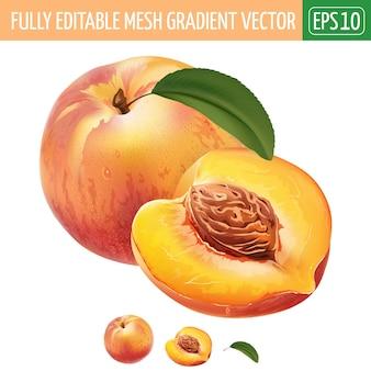 Иллюстрация персика на белом