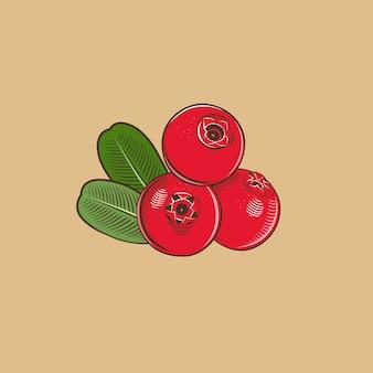 ビンテージスタイルのコケモモ。色のベクトル図