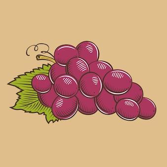 Виноград в винтажном стиле. цветная векторная иллюстрация