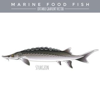 チョウザメ。海産魚